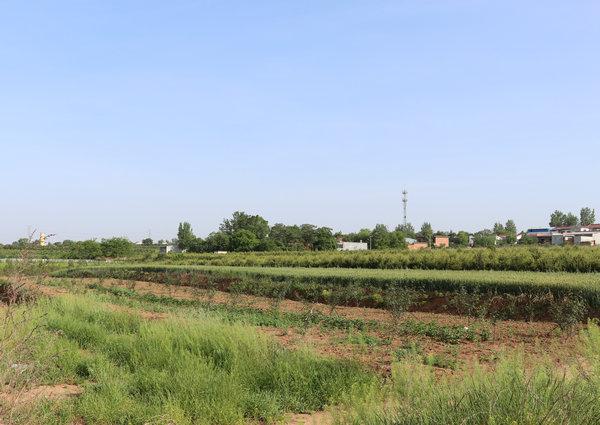 蓝田孟村镇猪倌方安民:勤劳养殖十春秋 换来汗水付东流